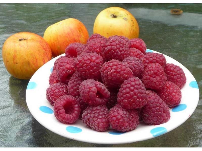 Fruits du framboisier Honorine